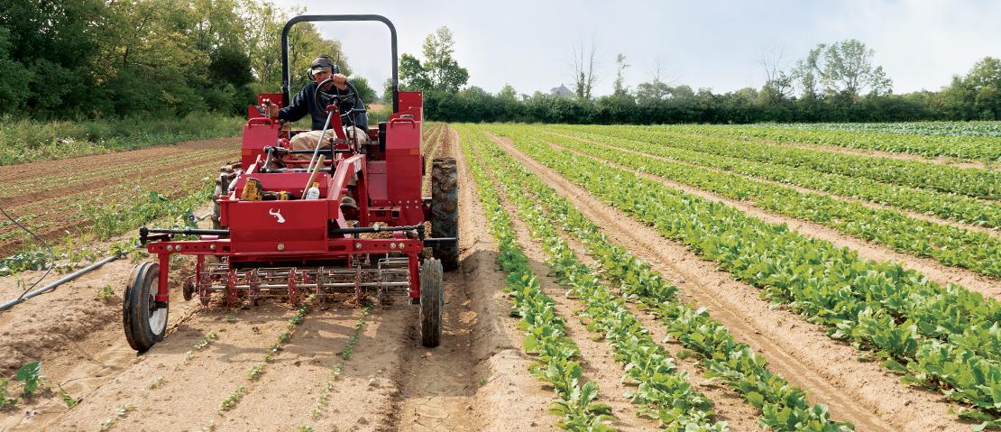 Basket weeder on Tilmor tractor