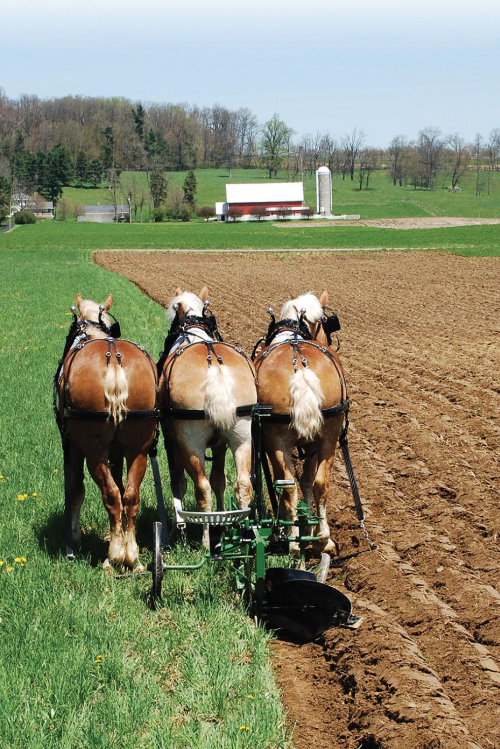 Pioneer Plowing with 3 horse team