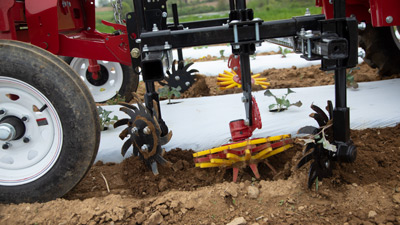 Edge of Plastic Cultivation with Finger Weeder and Spyder