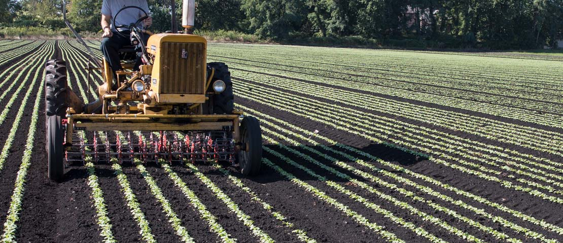 Tilmor Basket Weeder on International 140
