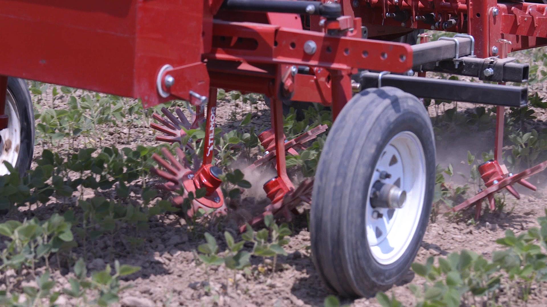 Tilmor Finger Weeder Cultivating Soybeans